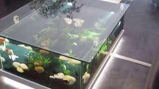 Aquarium D'eau Douce Table Aquarium Amazone Odyssee Aquarium