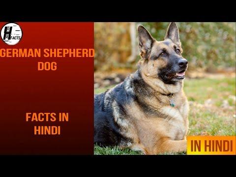 German Shepherd Dog Facts | Hindi | Dog Facts | HINGLISH FACTS