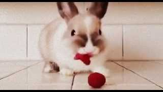 Funny Bunny Eat Strawberry