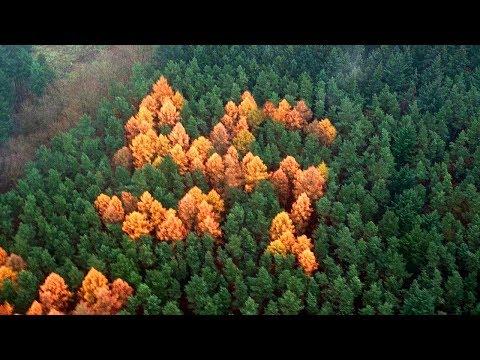 जंगल में बने इस स्वास्तिक का क्या रहस्य है| Strangest Unsolved Mysteries of All Time| Swastika
