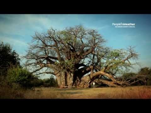 The Amazing Baobab