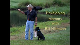 Developing Memory once your young Retriever is steady