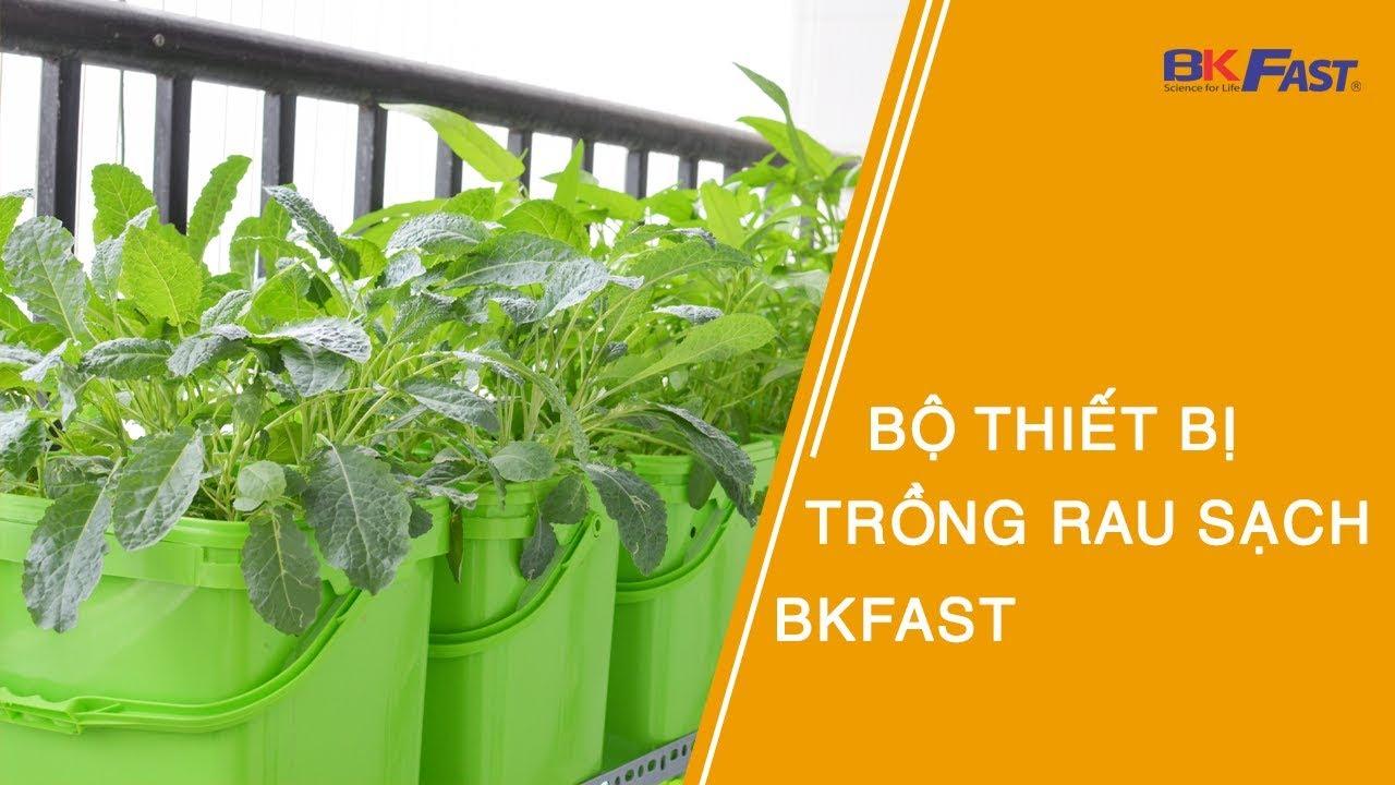 Trồng rau sạch với Bộ thiết bị BKFAST sự lựa chọn của mọi nhà!