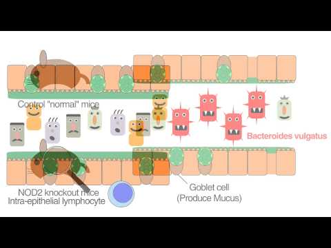 Crohns Disease Gene Nod2 Regulates Intestinal Microbiota