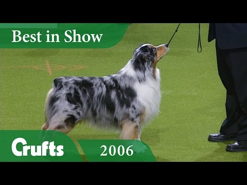 Australian Shepherd Wins Best In Show at Crufts 2006   Crufts Classics