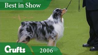 Australian Shepherd Wins Best In Show at Crufts 2006   Crufts Dog Show