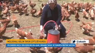 Moldovalı Gelin Muş'ta Tavuk Çiftliği Kurdu
