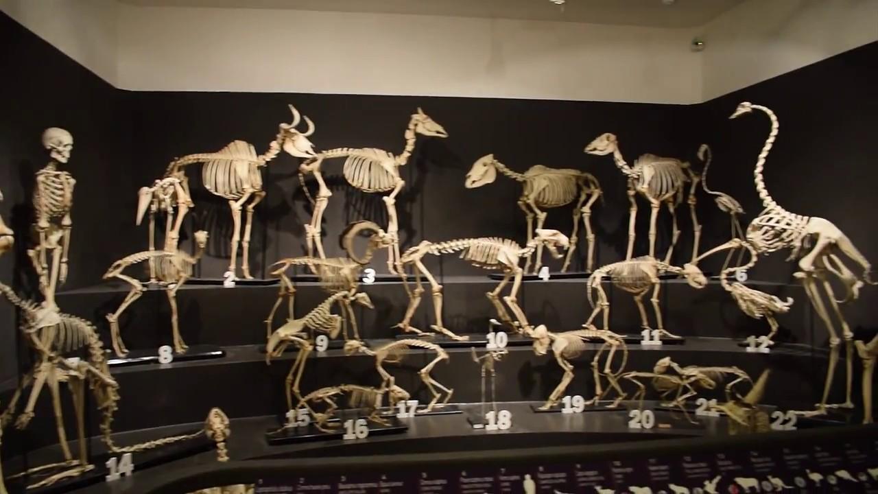 c-14 fossili datati Western Cowboy dating