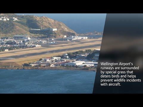 Global Footprint - Wellington