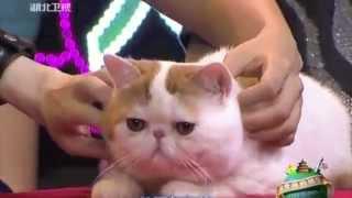 Кот Снупи на шоу/Cat Snoopy Show :)