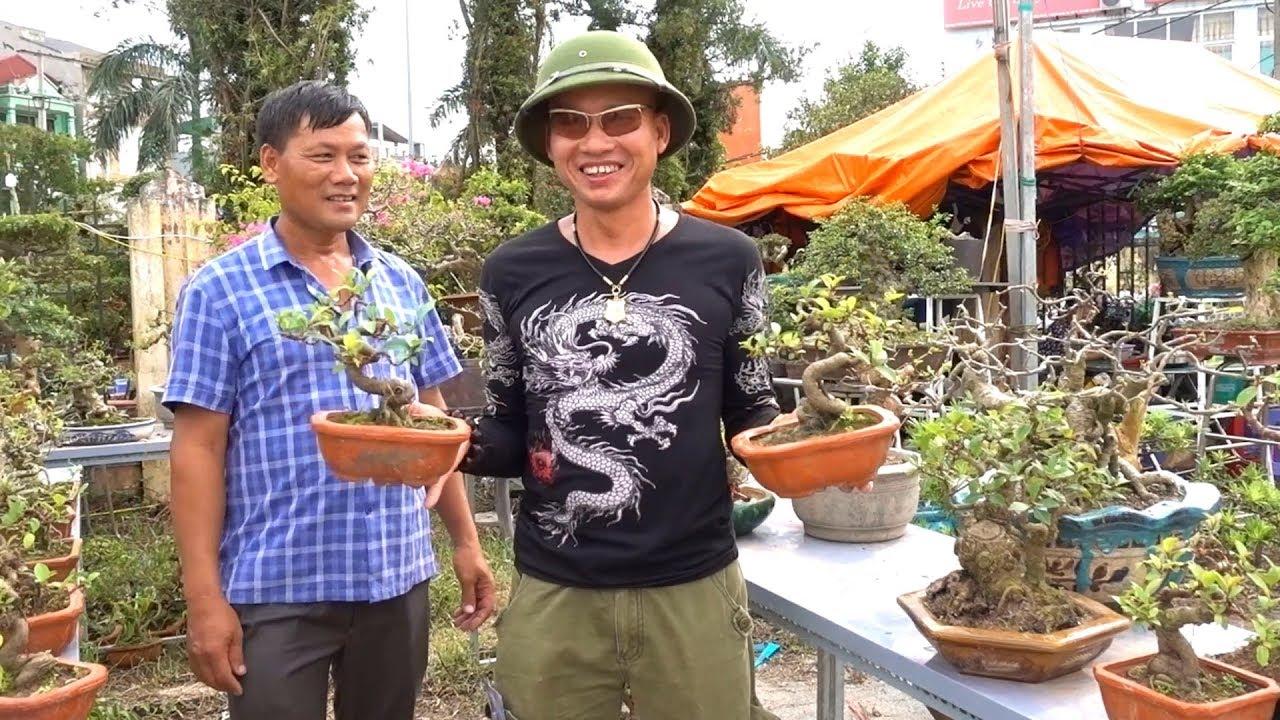 Si đồng giá 400 nghìn, báo giá toàn bộ cây đẹp ở triển lãm Phủ Lý – Hà Nam – bonsai market in Ha Nam