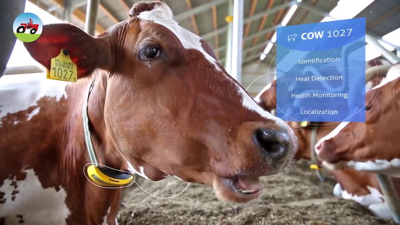 Smart Farming Livestock Management 1 Youtube