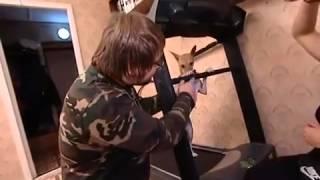 Дрессировка басенджи: занятия спортом вместе с собакой