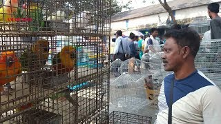 LATEST PRICE UPDATE OF BIRD AT GALIFF STREET PET MARKET KOLKATA INDIA | 8TH MARCH 2020 VISIT