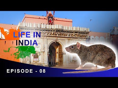 20,000 RATS TEMPLE | LIFE IN INDIA - EPI 8 | KARNI MATA TEMPLE RAJASTHAN DOCUMENTARY | ANIL MAHATO