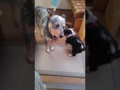 Hazel meets Rocky