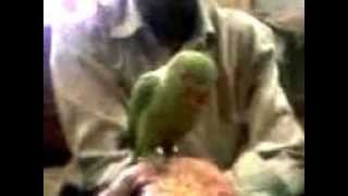 Dr. Pradip Doshi treating the Parrot