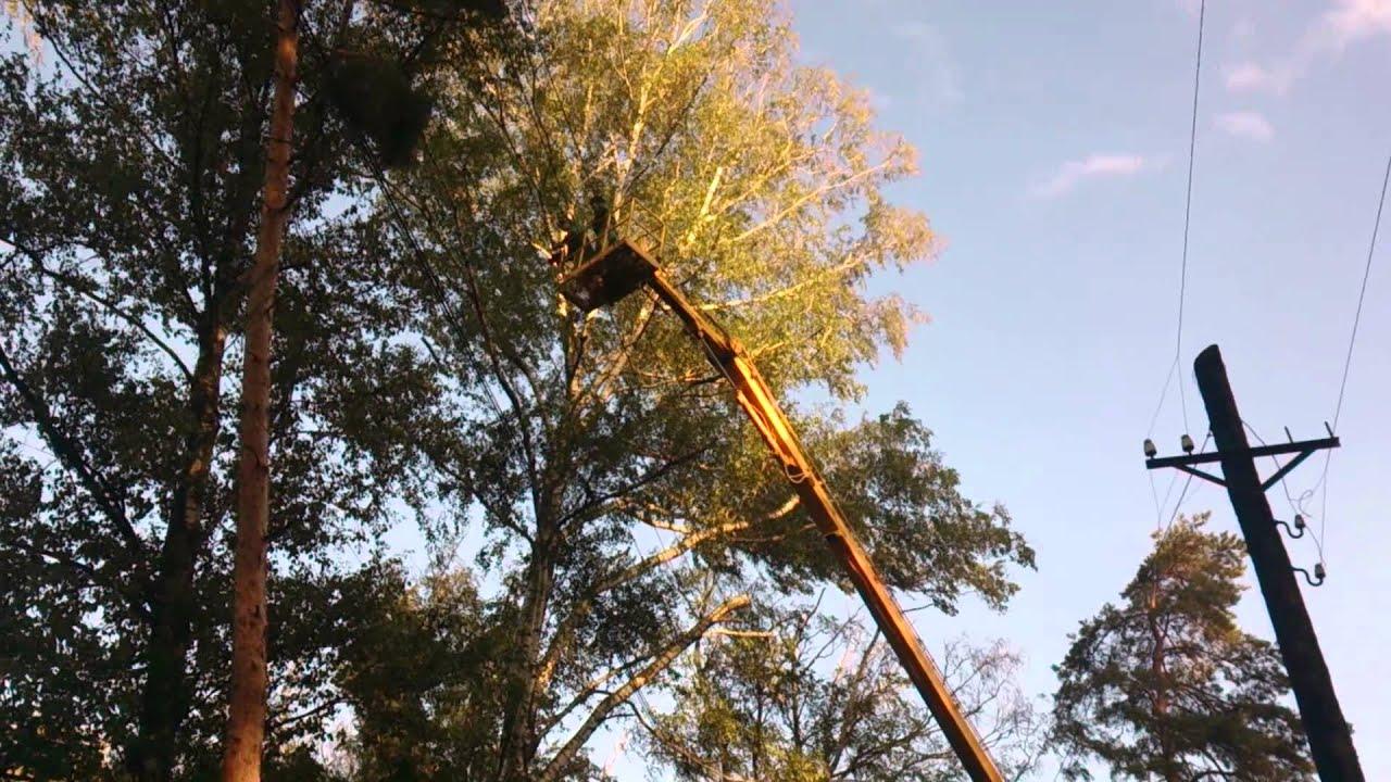 заявление на спил аварийного дерева образец