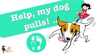 Help! My Dog ... Pulls!