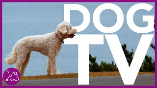 DOG TV   Videos to Entertain Your Dog All Day! (15 Hours)