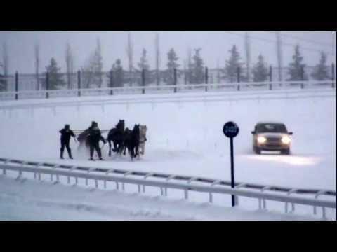 Skijоring, Скиджоринг на лошадях полукровных пород.