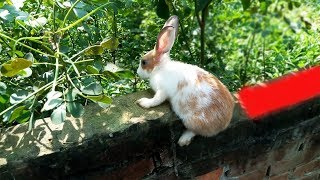 Gambar cover Rabbit magic. Give like to those who love rabbits