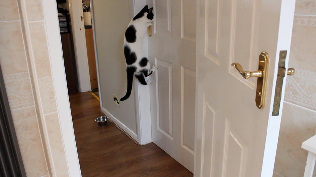 Cats Can Open Doors Youtube