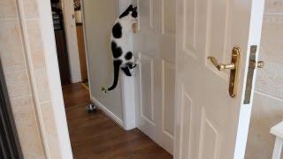 Cat Can Open Doors! MUST WATCH!