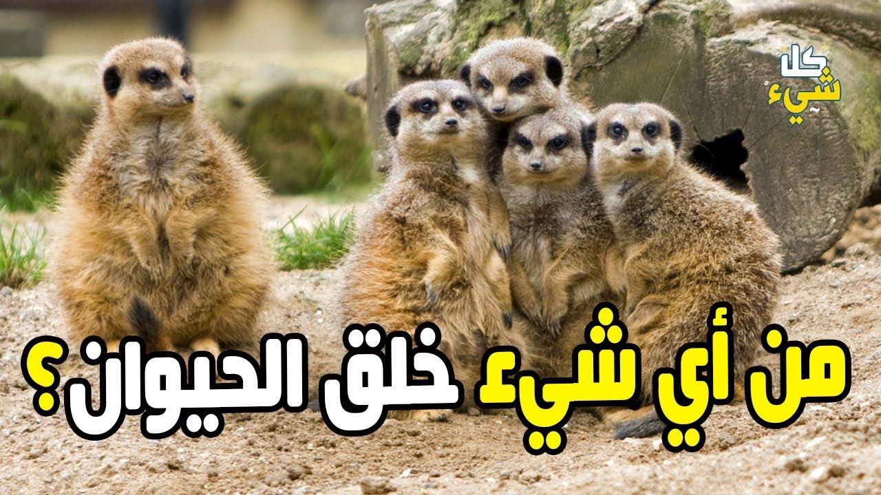 هل تعرف المادة التي خلق الله منها الحيوان والتي ذكرت في القرآن Youtube