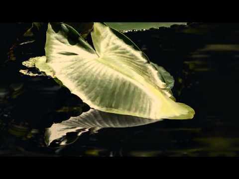 Claude Debussy: Nocturne