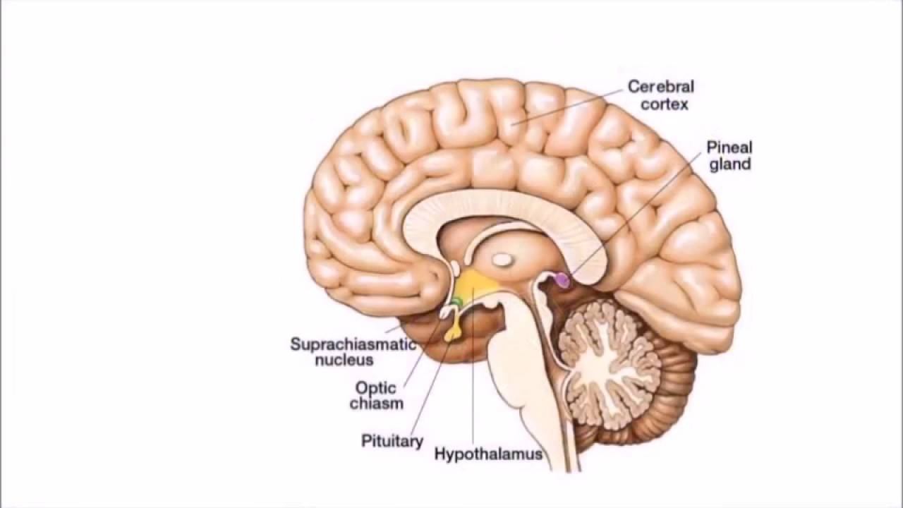 How Fluoride is poisioning your pineal gland - YouTube