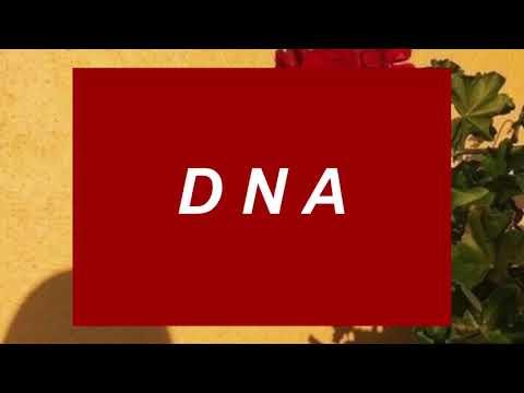 DNA - BTS LYRICS (ENGLISH TRANSLATION)