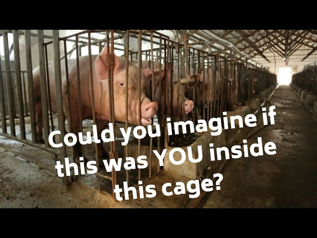 The Animals Can't Afford us to Give up Now #empathy #govegan #activism