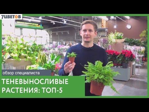 ТОП-5 теневыносливых растений | Озеленение офисов и домов без проблем