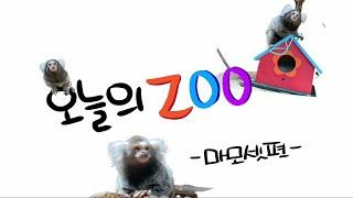 [서울어린이대공원 동물원] 5월 오늘의 Zoo(마모셋편)썸네일