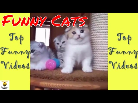 Super Funny Cats Compilation 2017 [P12] - 🐱 Best Funny Cat Videos Ever | Funny Cats 2017 by TFVs