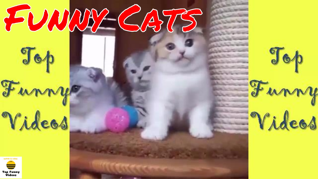 Super Funny Cats pilation 2017 [P12] 🐱 Best Funny Cat Videos