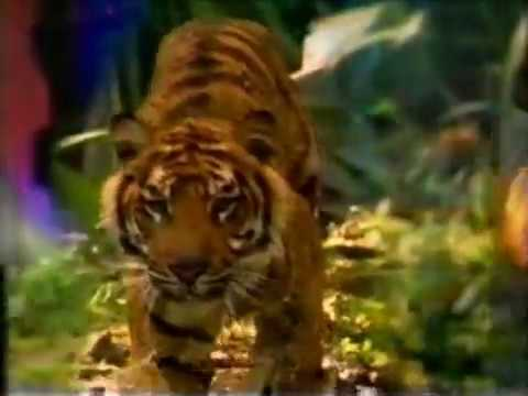 Discovery Channel (Canada) Next Bumper/Station ID 1999