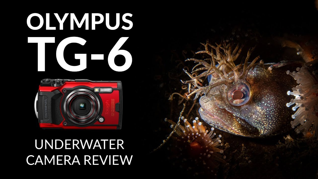 Olympus Tg 6 Underwater Camera Review