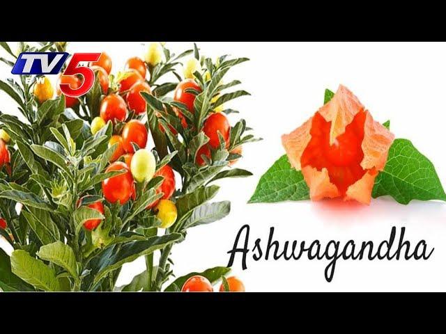 Health Benefits of Ashwagandha | Veda Vaidhyam | Hindu Dharmam