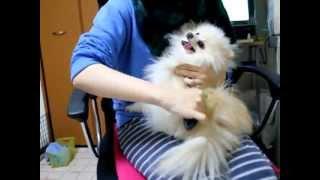 Фурминатор для длинношерстных собак, маленький