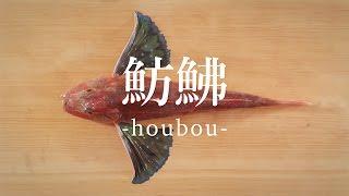 魴鮄(ほうぼう)のさばき方 - How to filet Bluefin Searobin -|日本さばけるプロジェクト