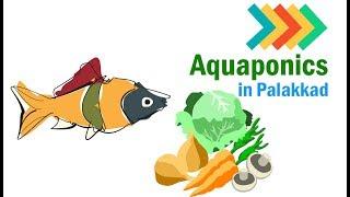 Aquaponics in Palakkad (Malayalam)