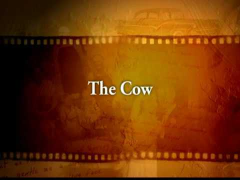 Leslie Curtis War Stories  The Cow