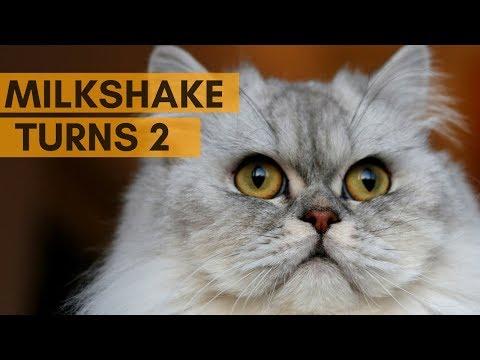 HAPPY BIRTHDAY MILKSHAKE!