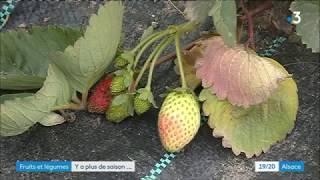 Des fruits d'été en automne