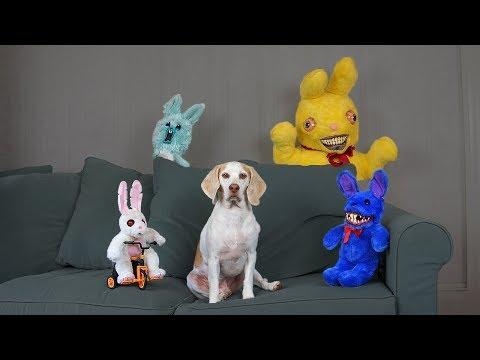 Dogs vs Evil Bunnies Prank: Funny Dogs Maymo, Potpie & Penny