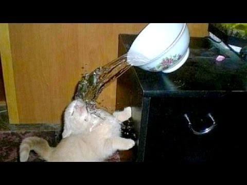 Thumbnail: Watch & Laugh! Super funny animals and pets - Funny animal compilation