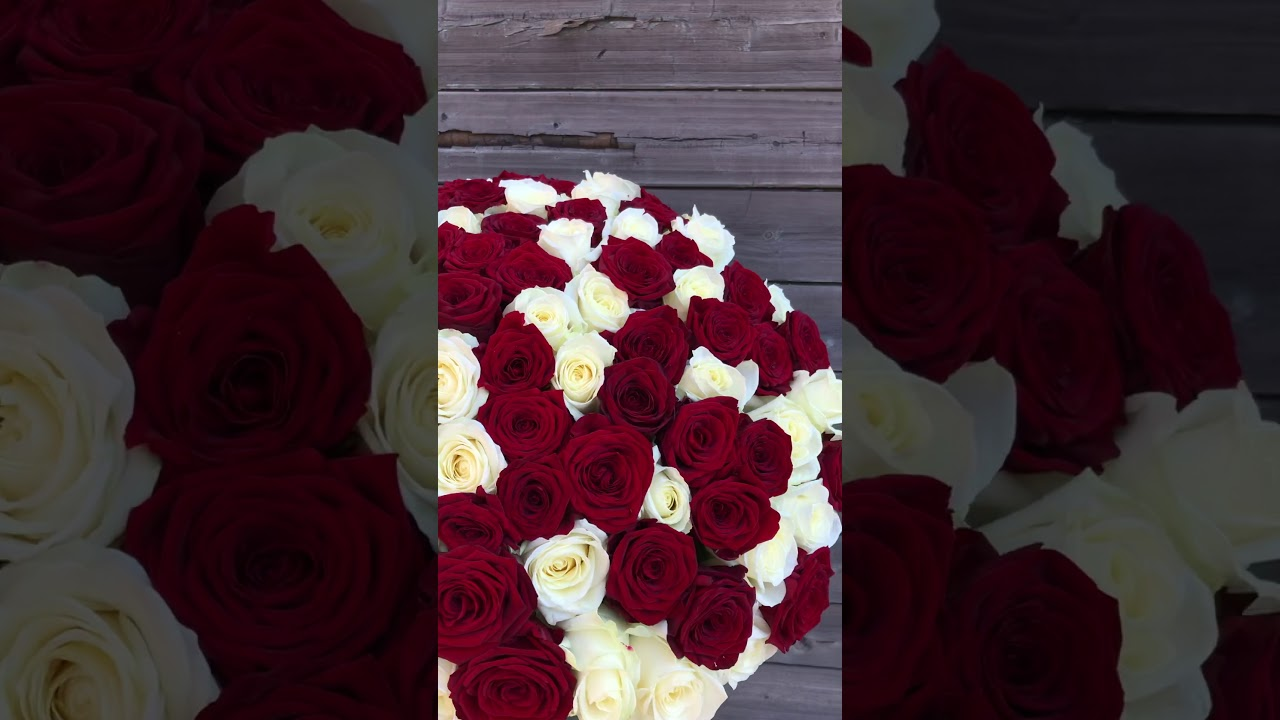 101 красная и белая роза 50 см