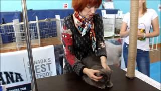 Выставка кошек в Благовещенске 3-4 ноября